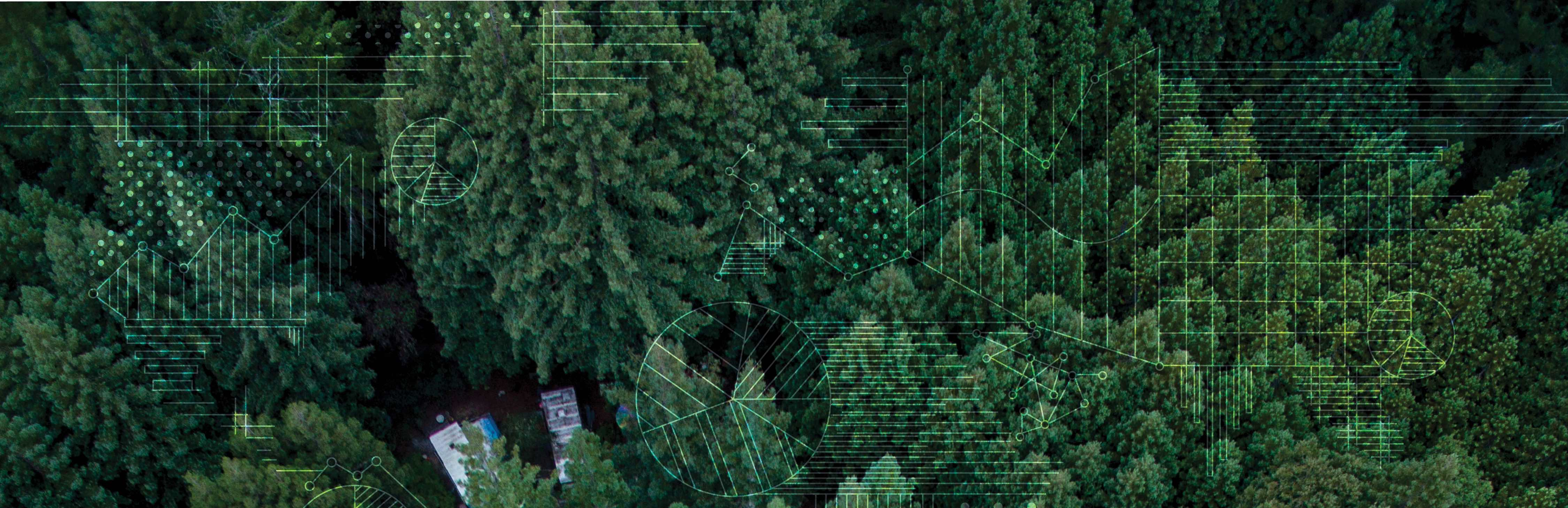 Aerial shot of trees with an overlay of data points in the shape of countries